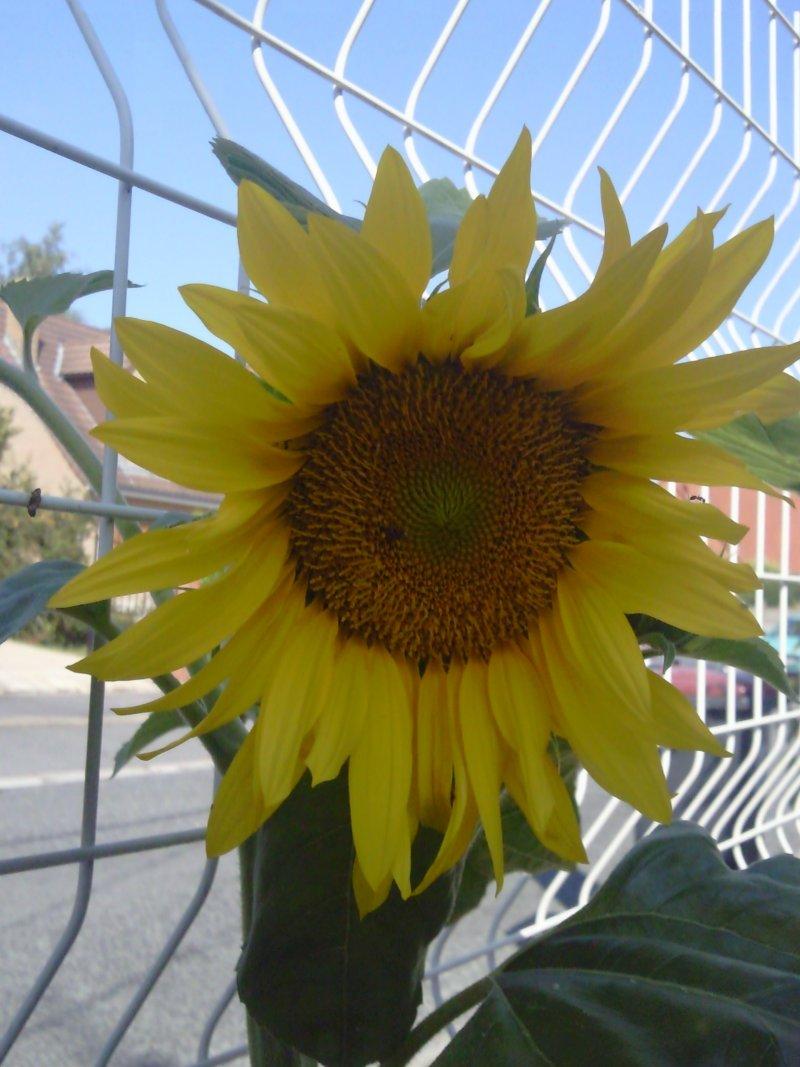 Quelques fleurs du jardin Tourne10
