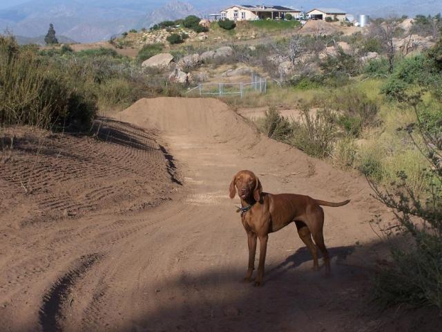 Les animaux de mon amie Dawn Track610