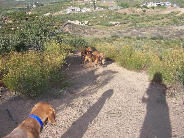 Les animaux de mon amie Dawn Track810