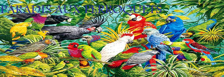 Forum sur les perroquets & les perruches
