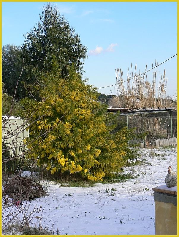 La neige chez Belle des champs  P1080217