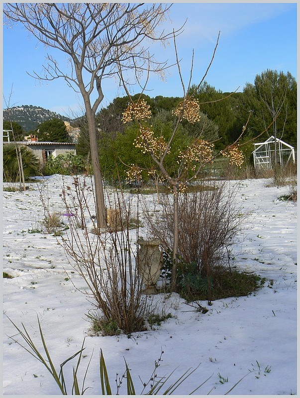 La neige chez Belle des champs  P1080310