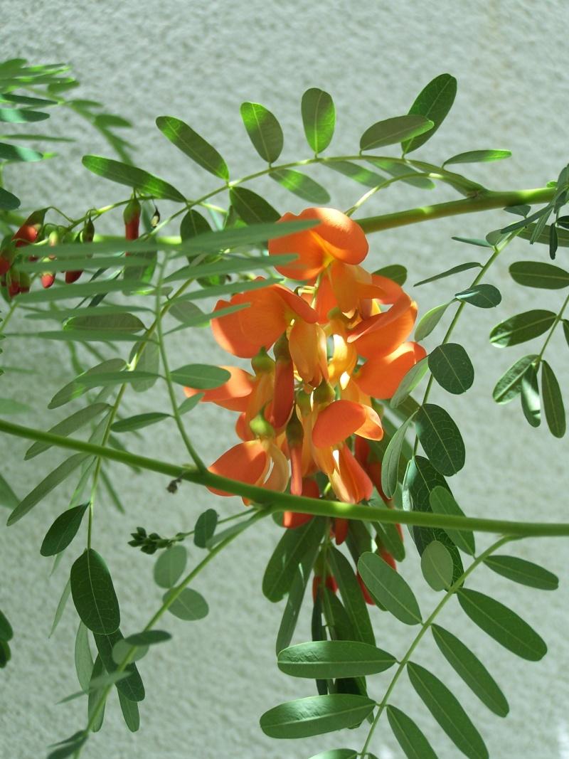 fleurs du moment  103_4411
