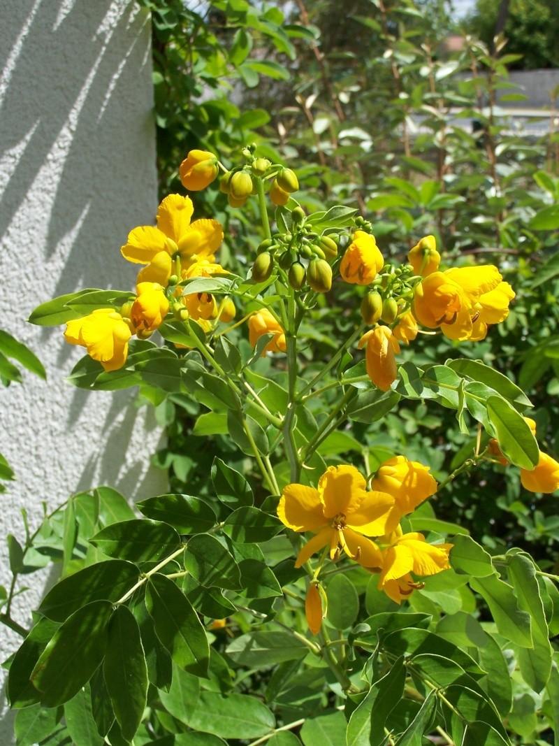 fleurs du moment  103_4413