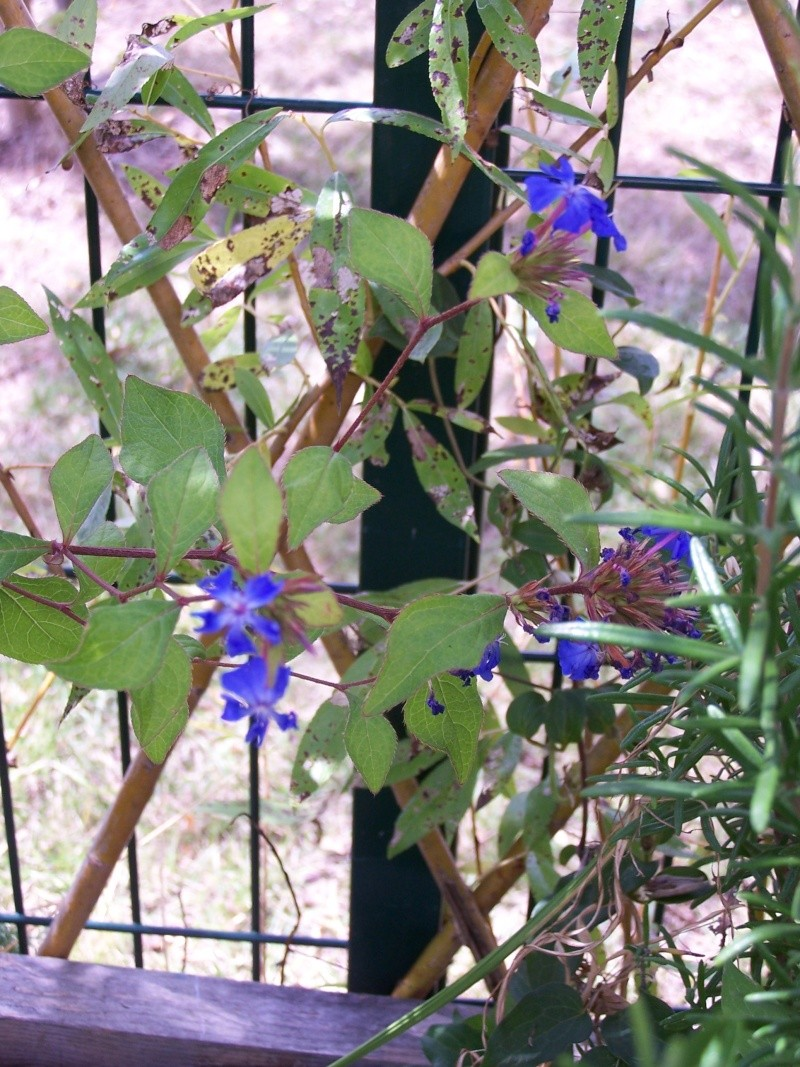 fleurs du moment  103_4416