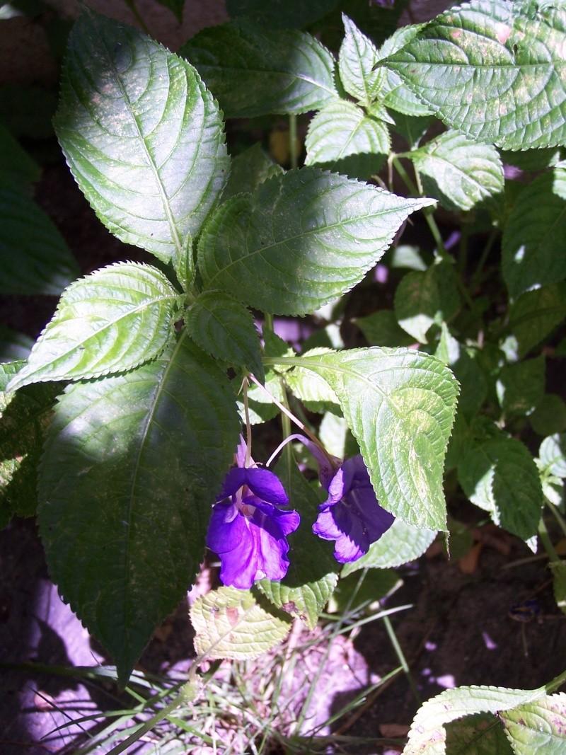 fleurs du moment  103_4417