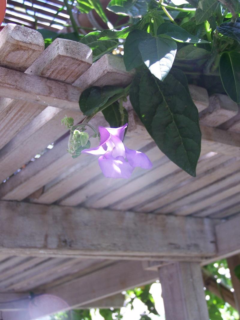fleurs du moment  103_4418