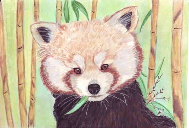 Pandarou Pandar10