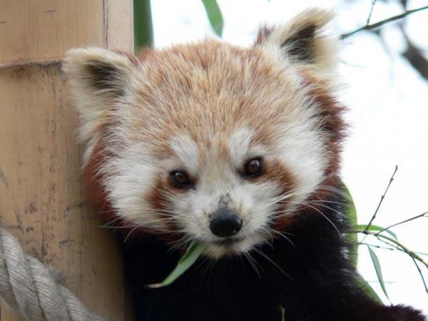 Pandarou Petit_10