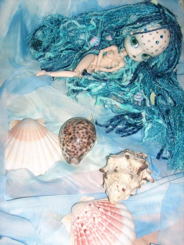 [dal custo]ecume de mer, nouvel aquarium p.3 - Page 2 Ecaill24