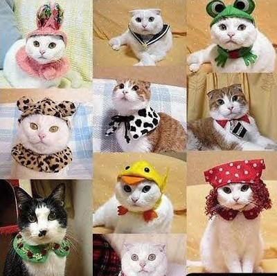 présentation de vos animaux: chats: 103110