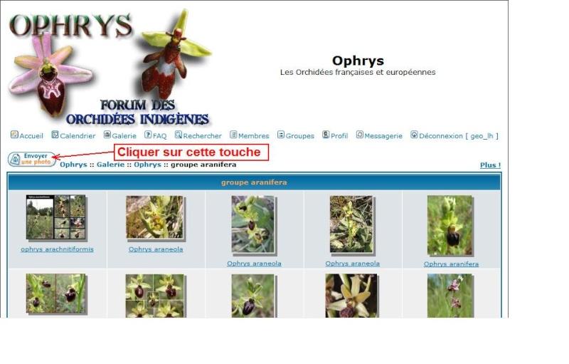 Hybrides Ophrys - Ligurie Galeri11