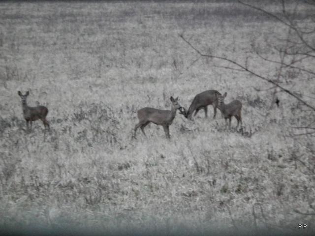 Mes sorties, Pirsch Affût  -  Saison de chasse 2010/2011 - Page 6 25_01_12