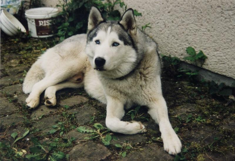 album photo  a tous nos loups rendu au paradis blancs File0010