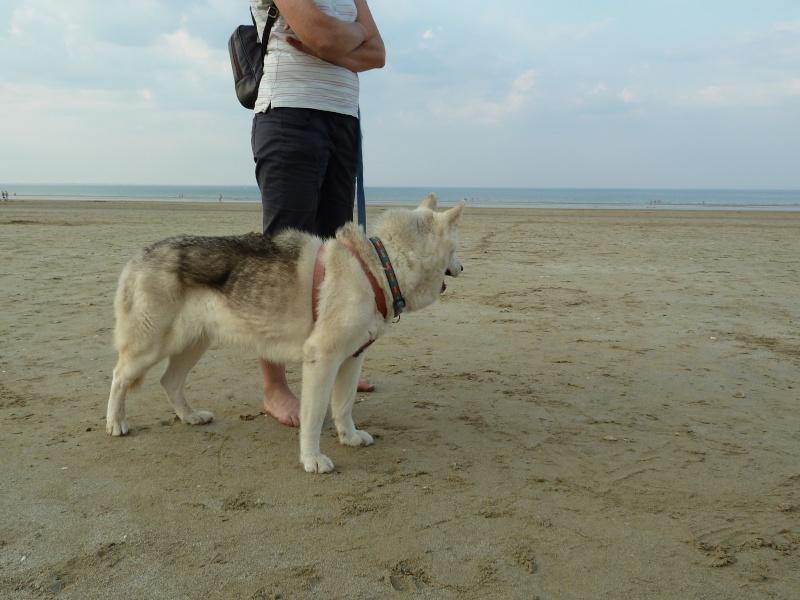 GROSSE URGENCE MIEM chienne X HUSKY 16 ans PAR:81    DECEDEE - Page 2 P1040810