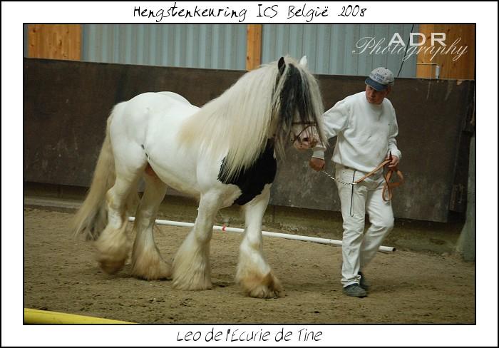 LÉO de L écurie de Tine vendu à l'élevage des Noës (France) Concou12
