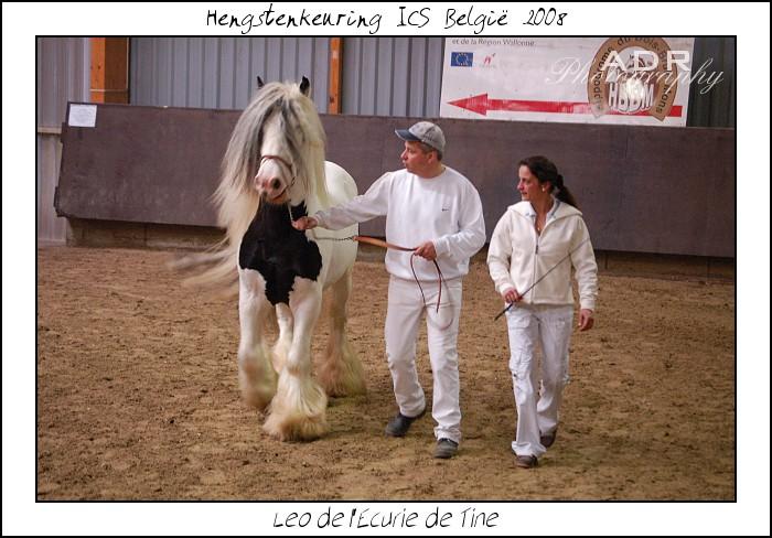 LÉO de L écurie de Tine vendu à l'élevage des Noës (France) Concou14