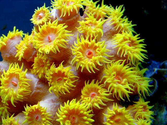 Lancement de mon premier aquarium marin - Page 5 00110