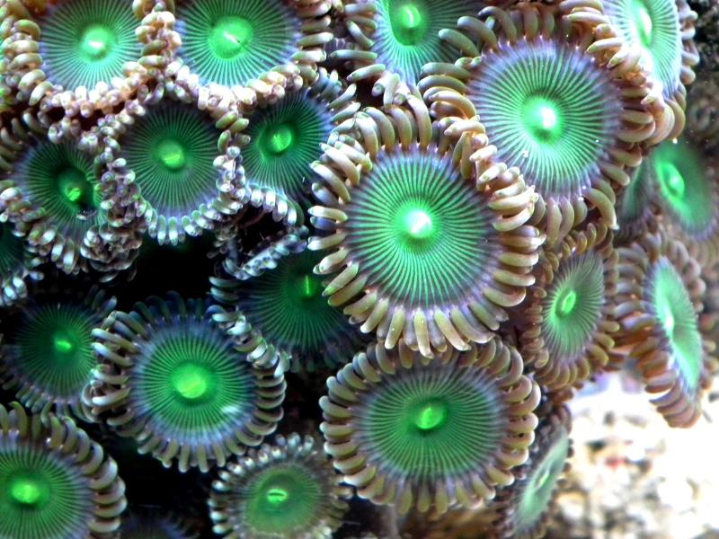Lancement de mon premier aquarium marin - Page 5 Dscf0110