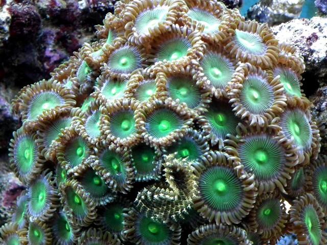 Lancement de mon premier aquarium marin - Page 5 Dscf0111