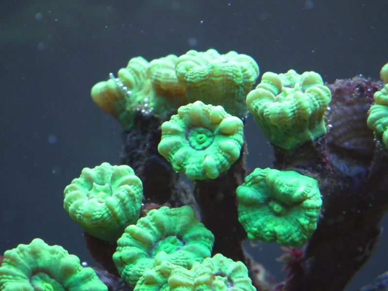 Lancement de mon premier aquarium marin - Page 5 Dscf0112