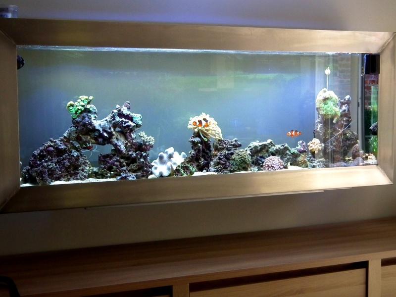 Lancement de mon premier aquarium marin - Page 5 Dscf0113