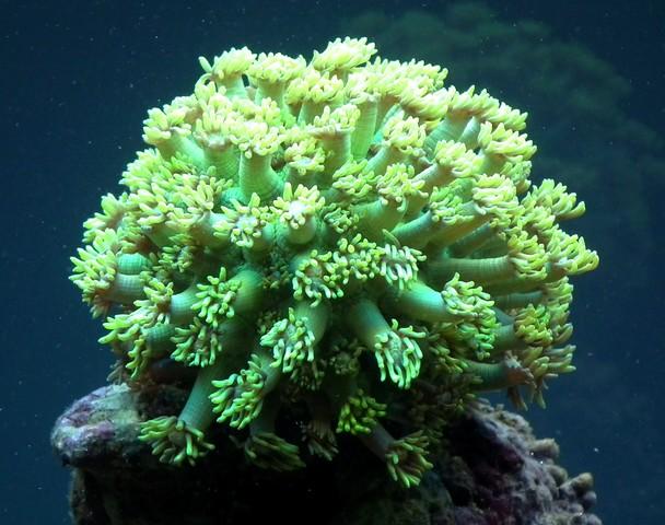 Lancement de mon premier aquarium marin - Page 5 Dscf0310