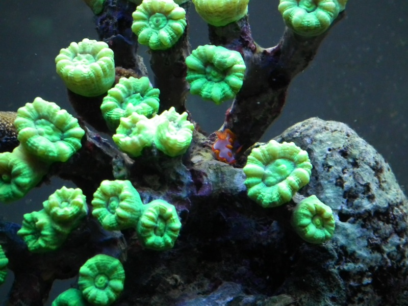 Lancement de mon premier aquarium marin - Page 5 Dscf0312