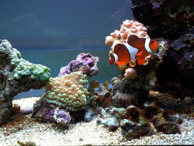 Lancement de mon premier aquarium marin - Page 5 Dscf0313