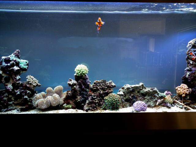Lancement de mon premier aquarium marin - Page 5 Dscf0314