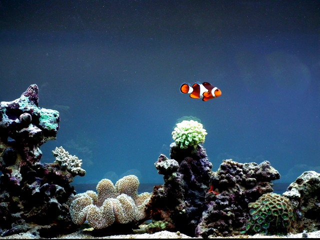 Lancement de mon premier aquarium marin - Page 5 Dscf0315