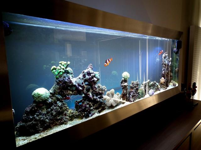 Lancement de mon premier aquarium marin - Page 5 Dscf0316