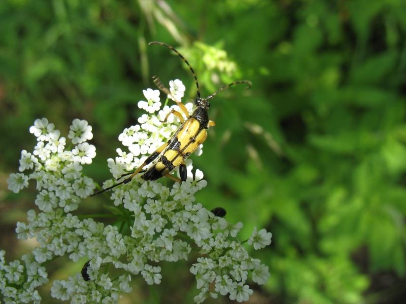 Les insectes de la colline de Sion (54) 3_juin10