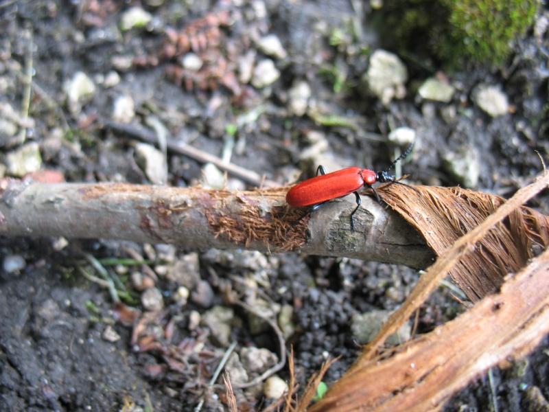 Les insectes de la colline de Sion (54) 3_juin11