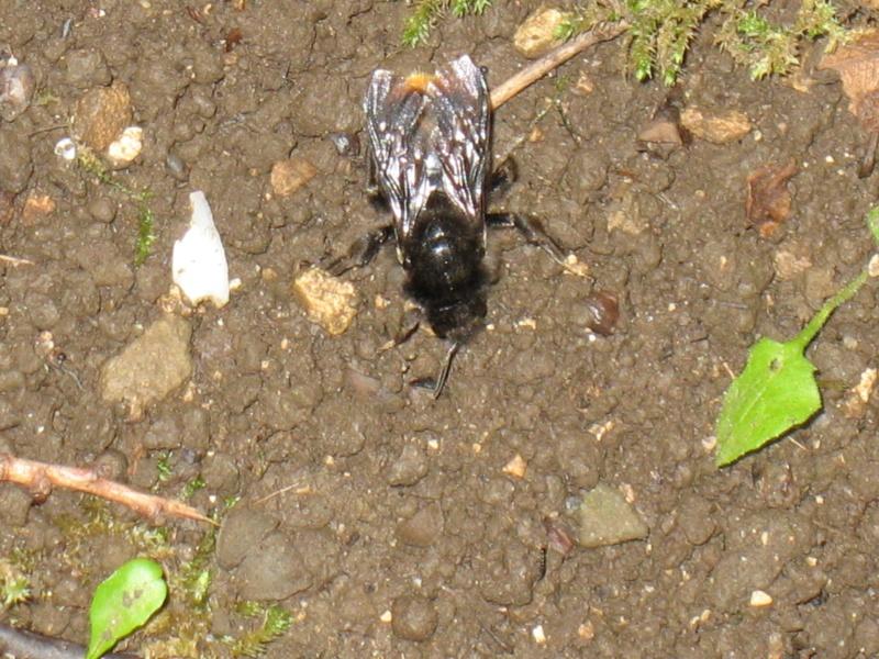 Les insectes de la colline de Sion (54) 3_juin12
