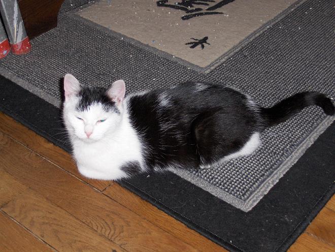 Mina, 6 mois, blanche et noire Mina310