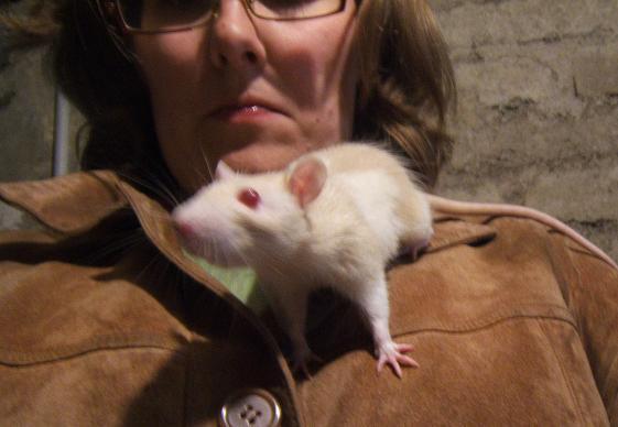 Pirate, rat mâle de 3 mois Pirate15