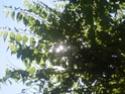Des projets d'environnement!!! Photo_10