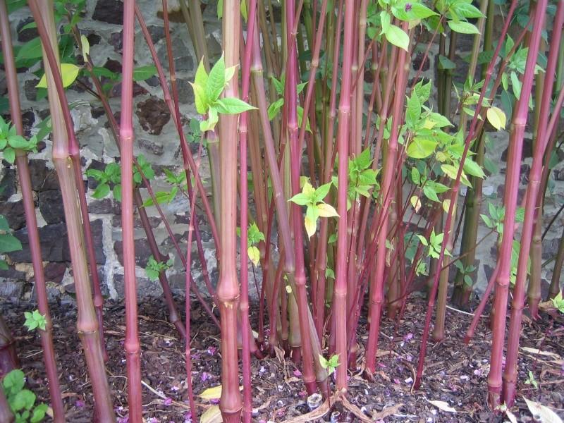 Ca ressemble à un bambou mais ce n'est pas un bambou ! Img_0811
