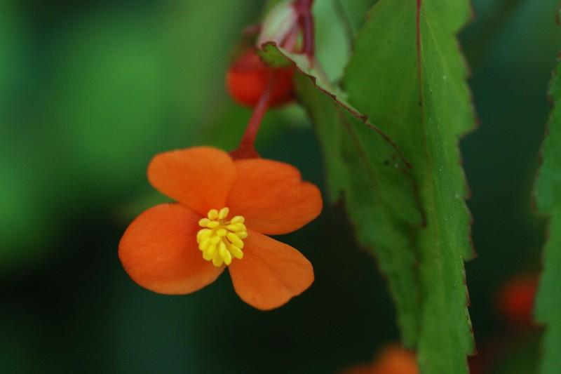 fleurs Bego1219