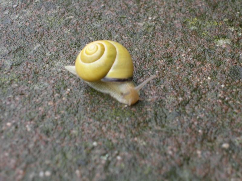 escargot Dscn2710