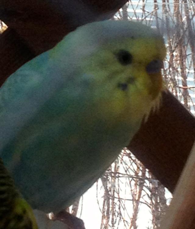 plumage ou autre  Img_1611