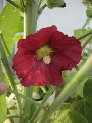 quelque graine ou plantes de chez lyzou!!! Dsc09135