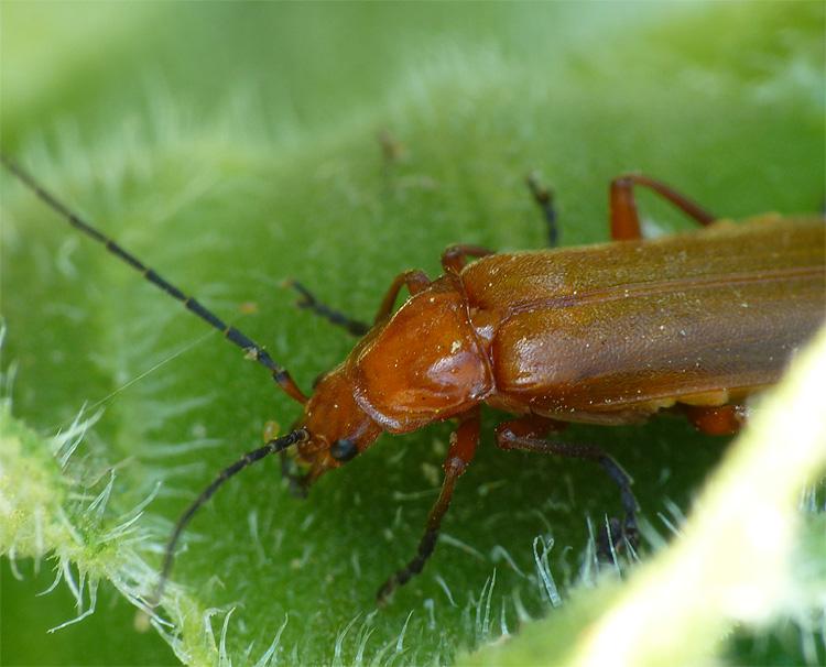 Insectes de mon jardin d'Anjou Insect12