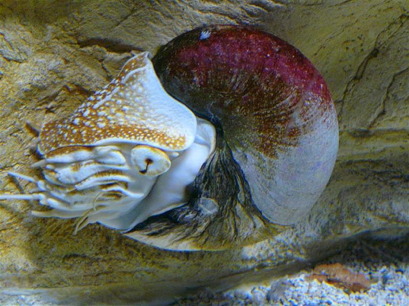 aquarium de la Rochelle 08090912