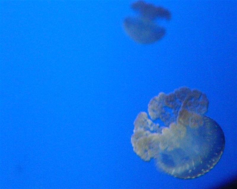 aquarium de la Rochelle 08090916