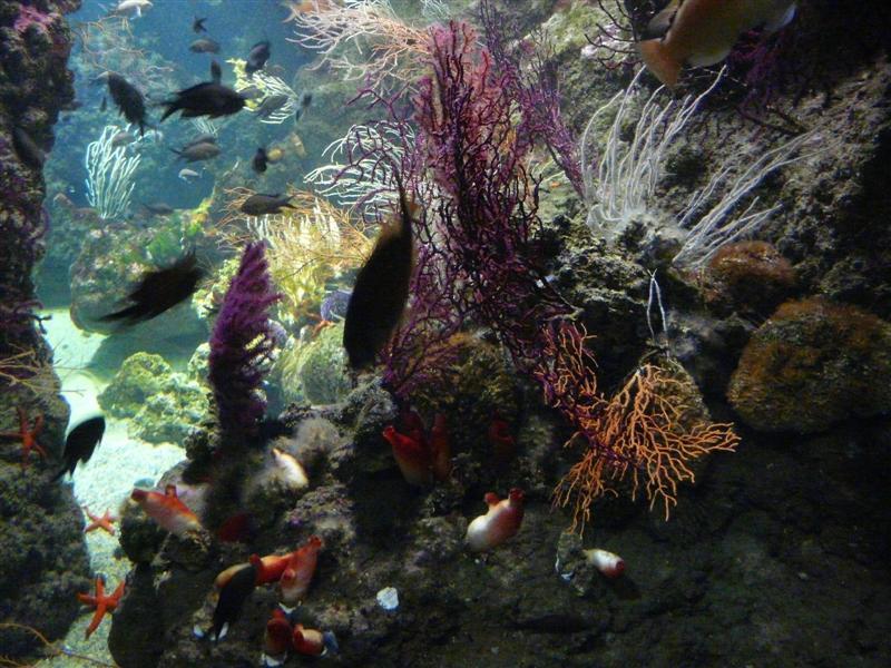 aquarium de la Rochelle 08090917