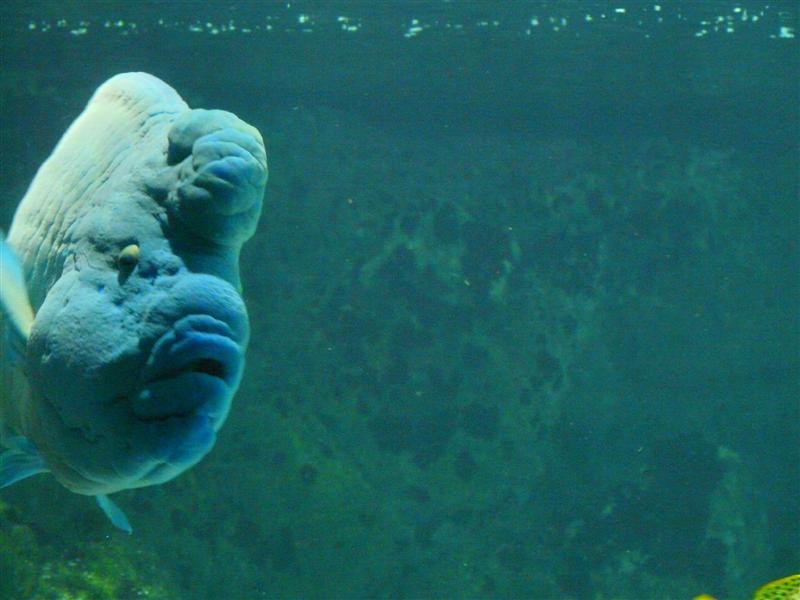 aquarium de la Rochelle 08090918
