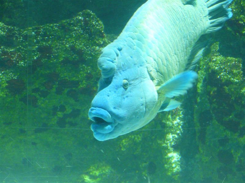 aquarium de la Rochelle 08090919