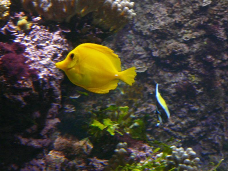 aquarium de la Rochelle 08090920